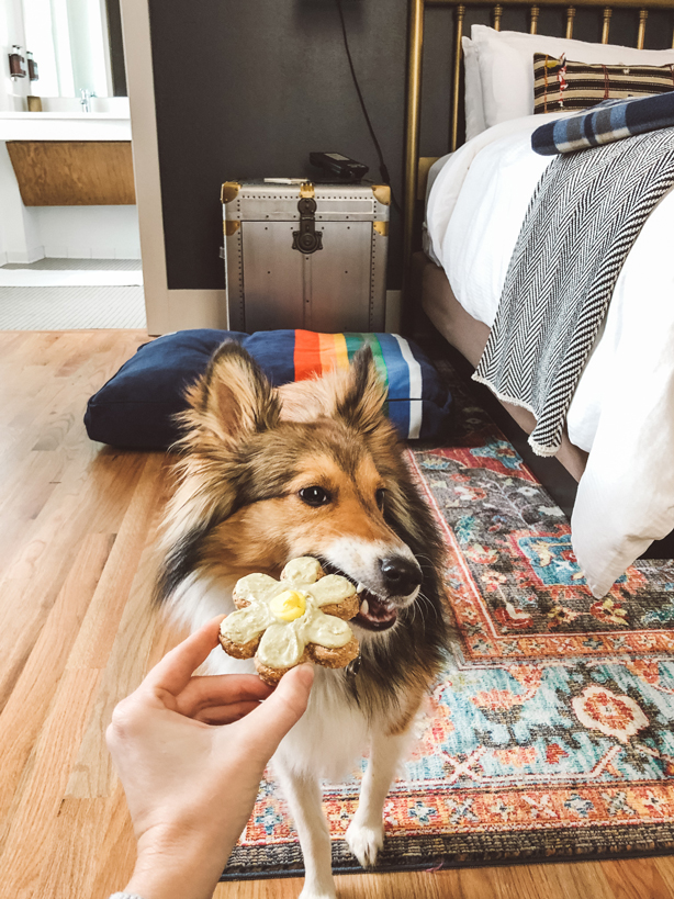Dog eating treat in guestroom at Armstrong Hotel